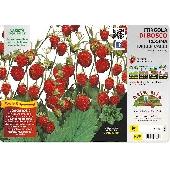 Vilde jordb�rplante - Orto MIo
