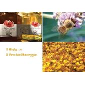 Acacia honey - Il Vecchio Maneggio