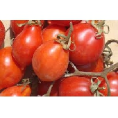 """""""Pomodorino del Piennolo del Vesuvio DOP - fresh cherry tomatoes"""