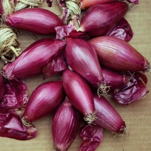 Red onion  Tropea