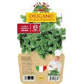 Oregano - Pot Plant da 14 cm. - Orto mio