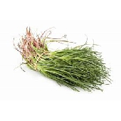 Agretti di Latina (Barba di Frate)